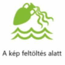 LXR Kurkuma Tömjénfa Komplex kapszula 60x